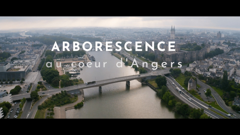 ANGERS PROJET ARBORESCENCE